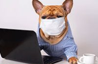 Revista-anestesia-uti-emergencia-em-Foco-vol06-rede-social-veterinario
